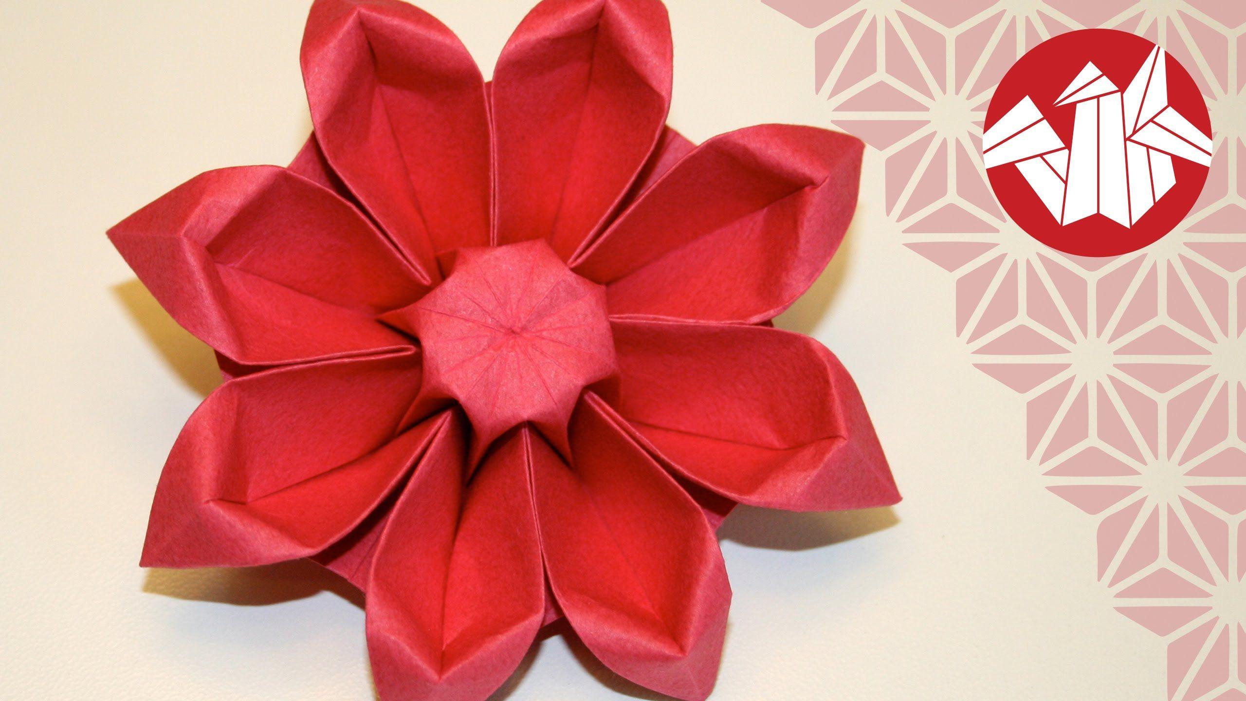 Encore Une Magnifique Fleur De Makoto Yamaguchi Le Gerbera Ce