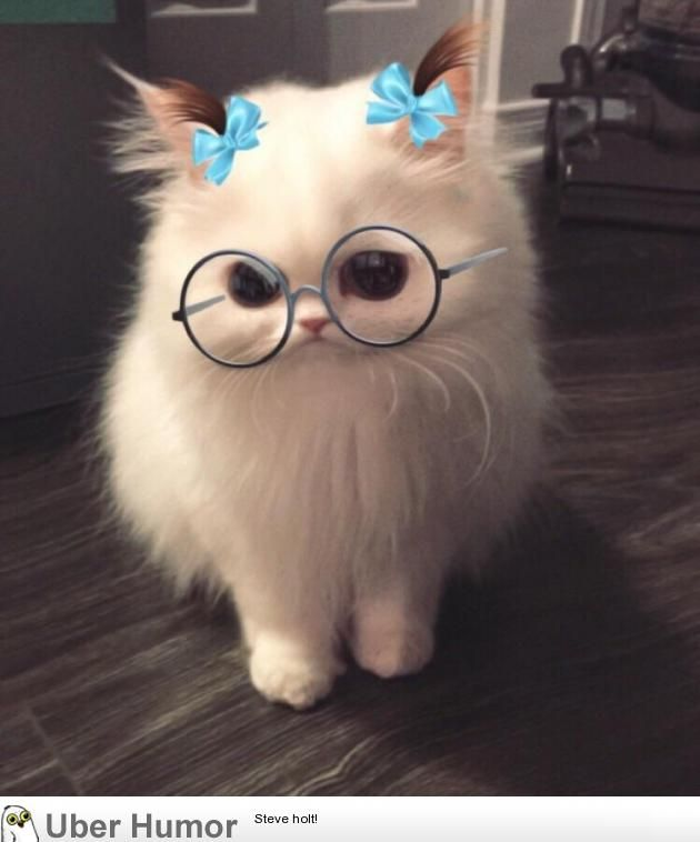 This Snapchat Filter On My Cat Cute Animals Funny Animals Funny Animal Photos