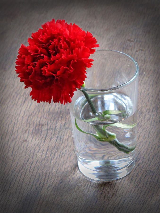 Carnation In A Glass By Dave Mills Carnations Glass Flower Photos