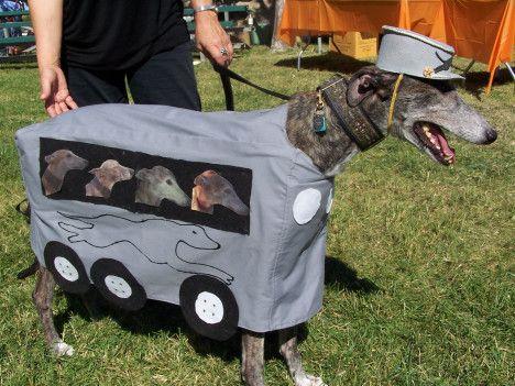 Greyhound Bus Dog Halloween Costume Dog Halloween Costumes Dog