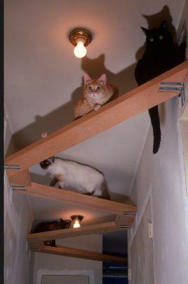 pin by bjorna wanders on katten pinterest cat cat tree and cat cat rh pinterest com