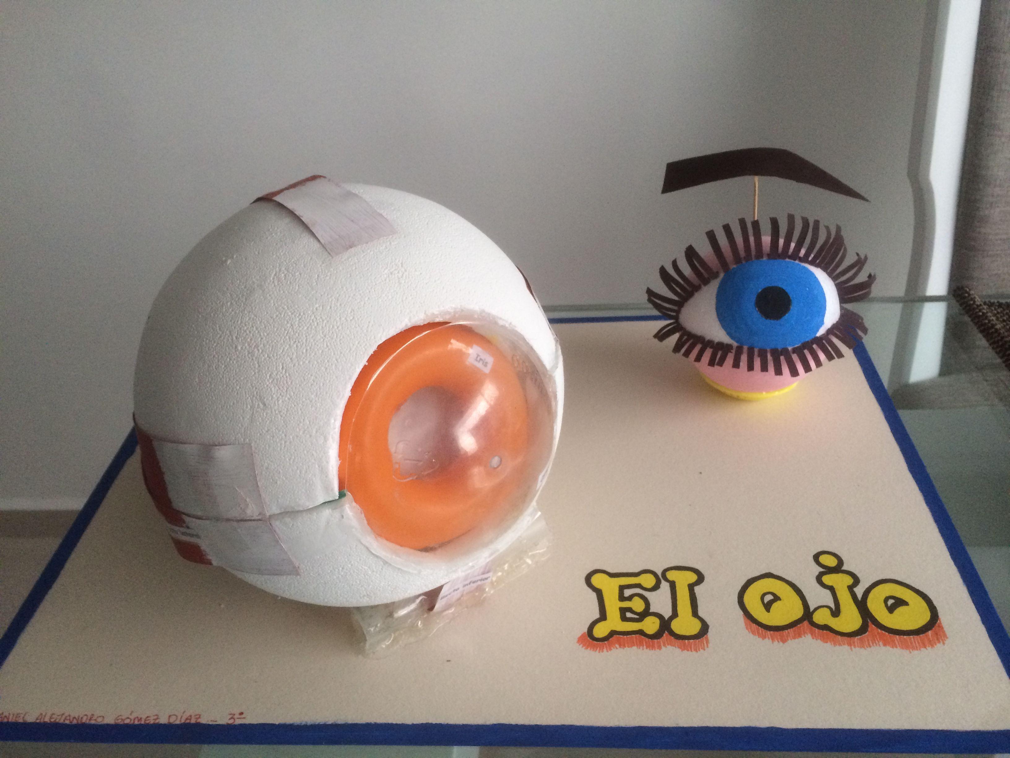 Maqueta ojo humano | Necesario | Pinterest | Ojo humano, Maquetas y Ojos