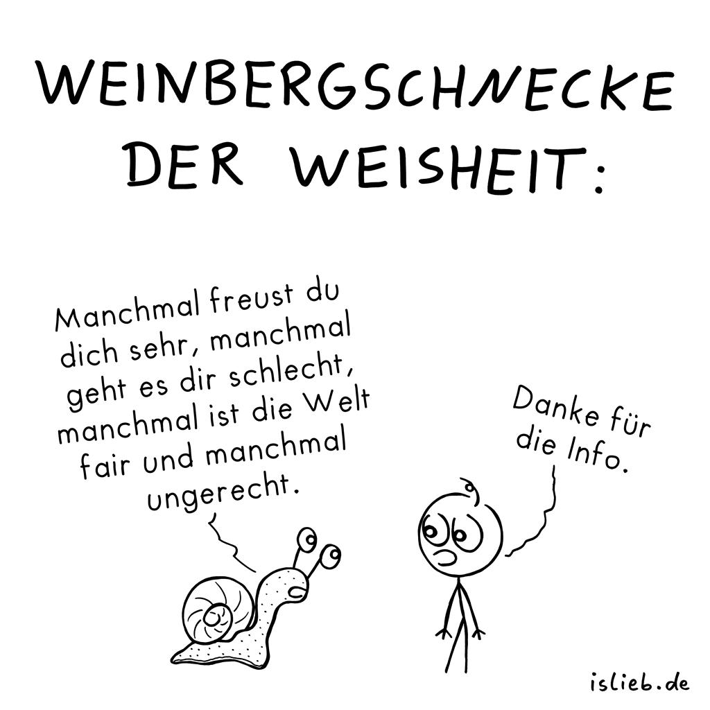 Weisheitssschnecke. Is lieb? | #schnecke #weisheit #spruch #sprüche ...