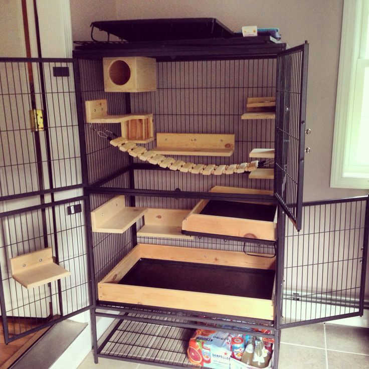 Beautiful two level chinchilla cage setup with lots of ...