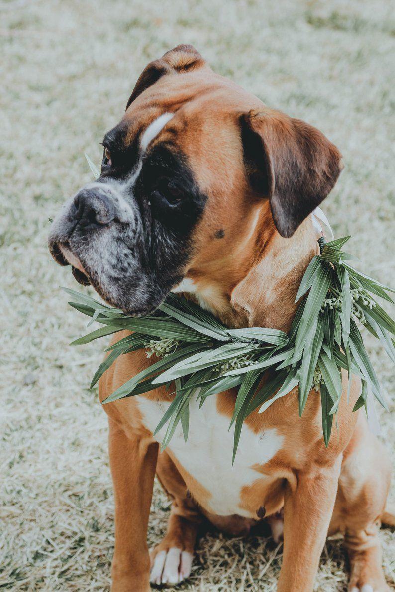 Greenery Dog Flower Collar Eucalyptus Dog Flower Crown Pet