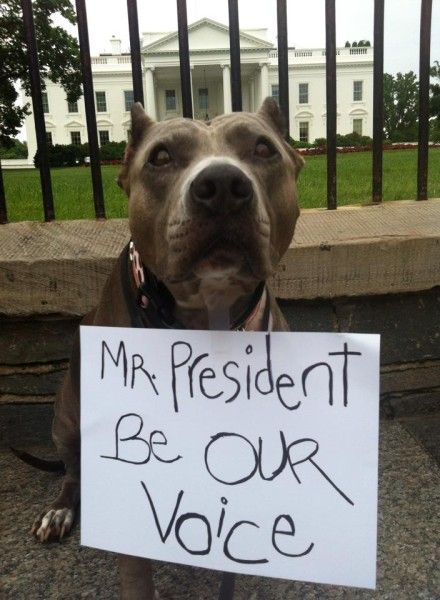 Washington Dc Stands Up For Pit Bulls Pitbulls Breed Specific