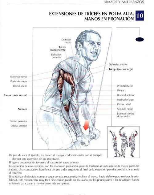 23 Ideas De Gym Rutinas De Ejercicio Ejercicios Musculacion Ejercicios