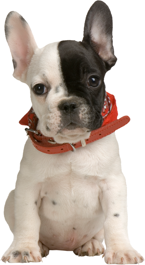 Puppy PNG Clipart