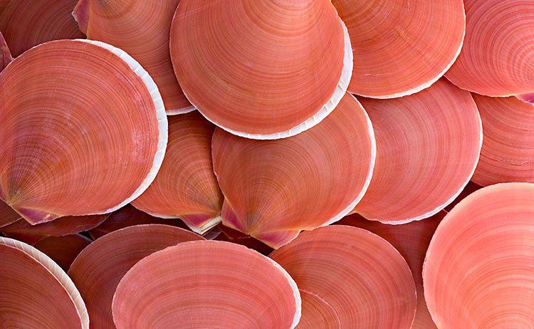 Des Coquillages Saumon Pour Lundisoleil10 Coquillage Couleur Et Matiere Couleur Corail