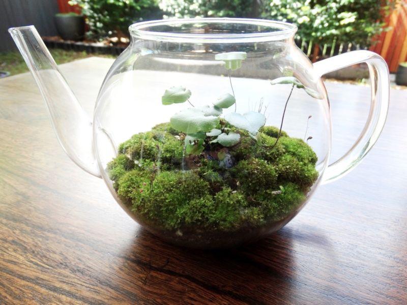 Terrarium Glass Teapot Miniature Landscape Indoor Garden Plants