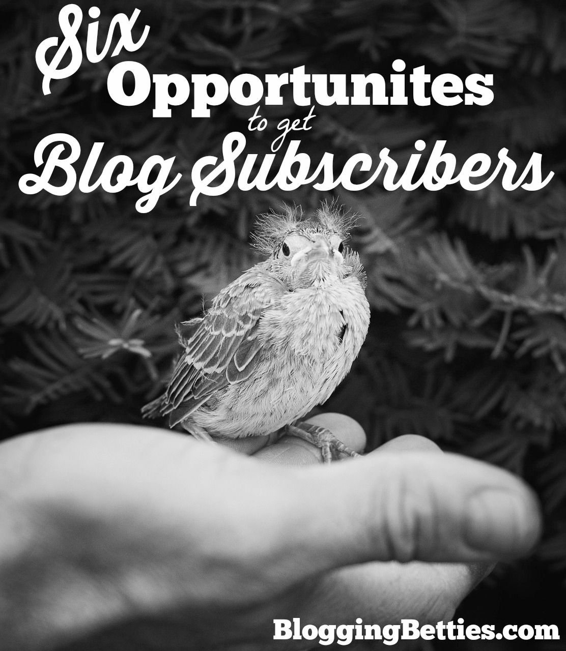 Want more blog subscribers? 6 overlooked locations on your site to get more subscribers!