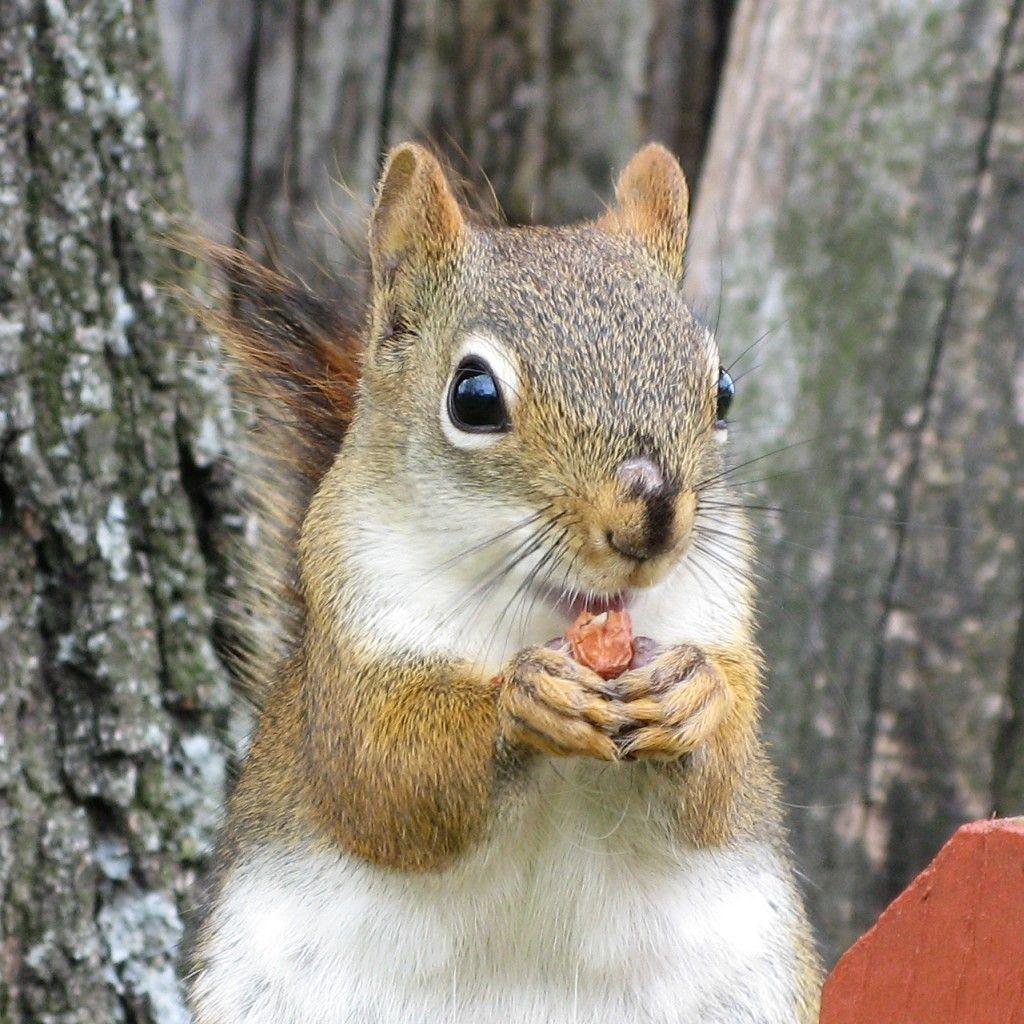 Écureuil joyeux Happy Squirrel canada nature