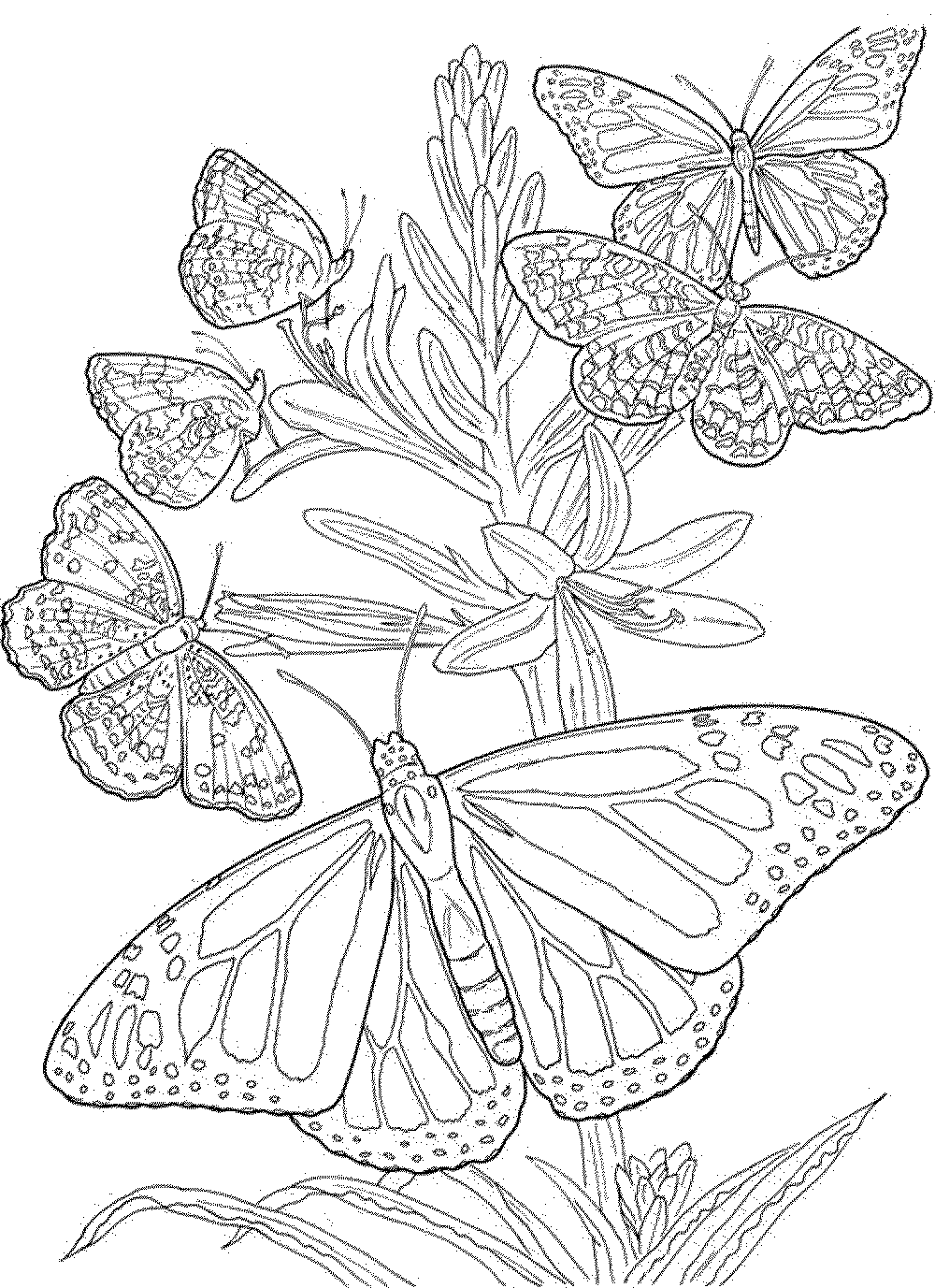 Coloring Book Pages For Adults Printable Kids Colouring Pages Butterfly Coloring Page Flower Coloring Pages Free Coloring Pages