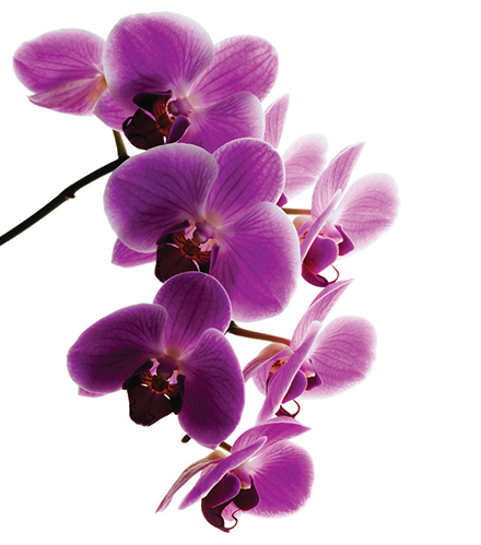 Beautiful Orchid Purple orchids, Green orchid, Orchids