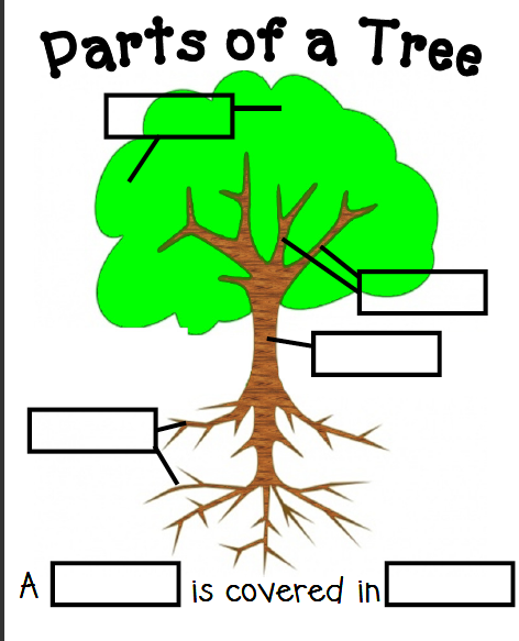 labelpartsofatree parts tree