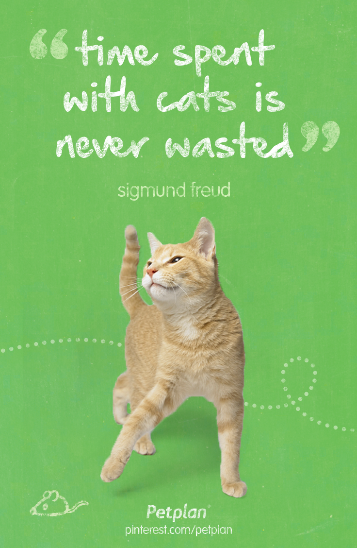 Time Spent With Cats Is Never Wasted Sigmund Freud Sick Pets Chihuahua Puppy Care Pet Insurance Reviews