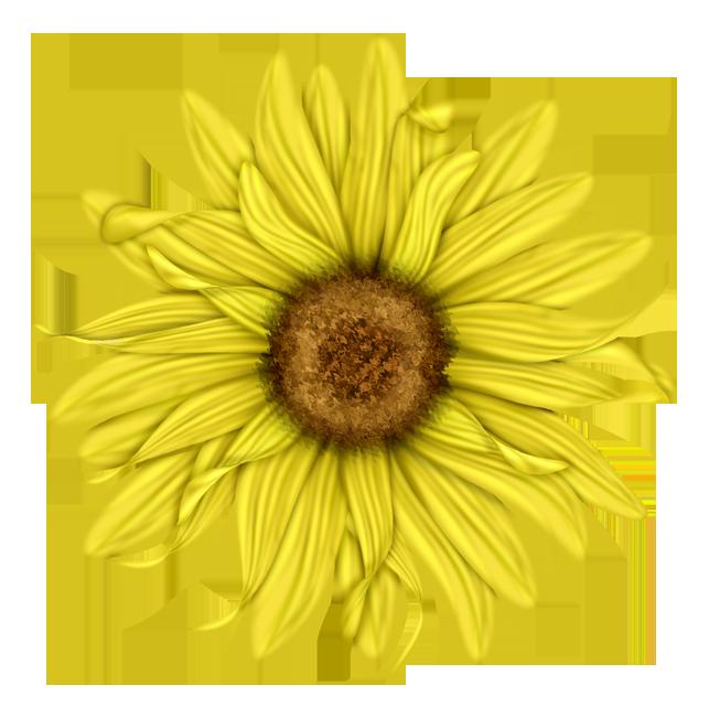 Sunflower Png Images Transparent Background: Scrapbooking ~ Blommor,blad,träd 3D