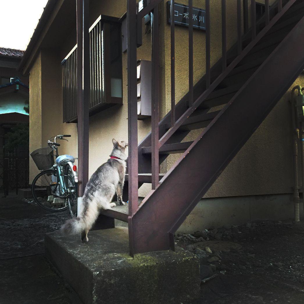 よその家を探索。好奇心がつよい猫です