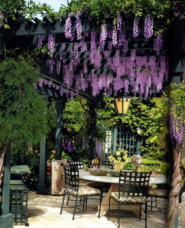 - Garden Pergola Photos Growing Plants, Pergolas And Garden