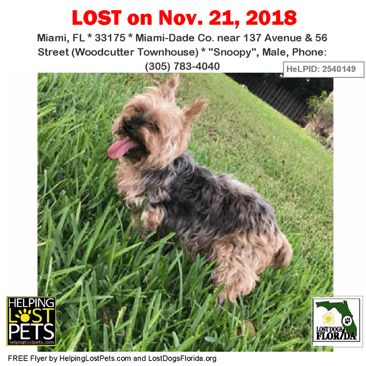 Lost Dog Please Help Me Help Snoopy Get Home He Is A Tan Grey Male Yorkshire Terrier Yorkie Last Seen Near 137 With Images Losing A Dog Dogs Losing A Pet
