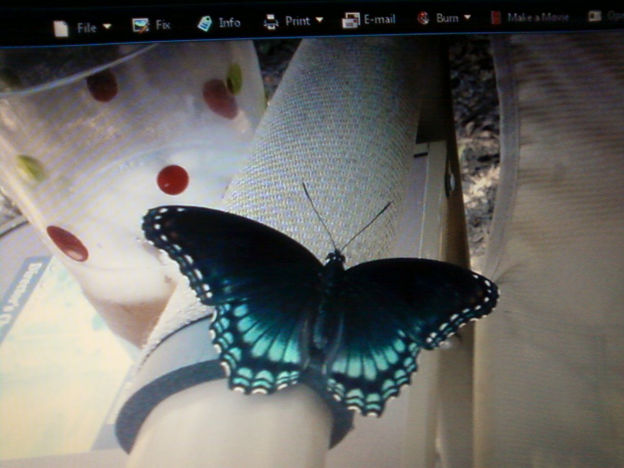 Butterfly Actually Drinking Sweet Tea I Put On Arm Of Lawn Chair I Love It Lawn Chairs Garden Lovers Sweet Tea