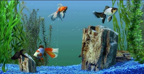 Moving Wallpaper Collection For Laptop Cool Wallpaper Dan Design Aquarium Live Wallpaper Aquarium Screensaver Free Animated Wallpaper