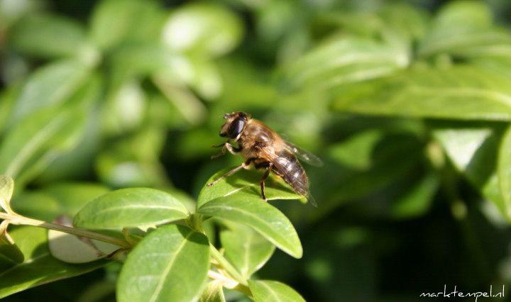 The Fly / De Vlieg