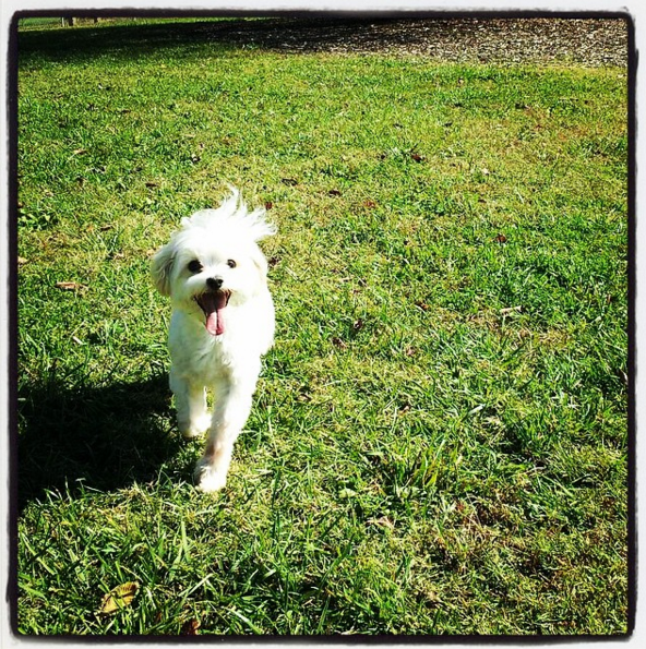 So stoked to be at Fenway Dog Park - Moss Wright Park - Goodlettsville, TN - Angus Off-Leash #dogs #puppies #cutedogs #dogparks #angusoffleash #goodlettsville #tennessee