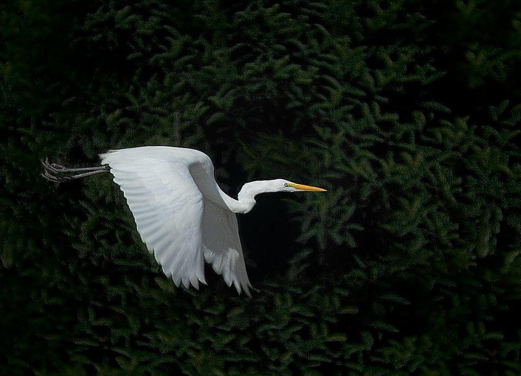 Vuelo (flight)