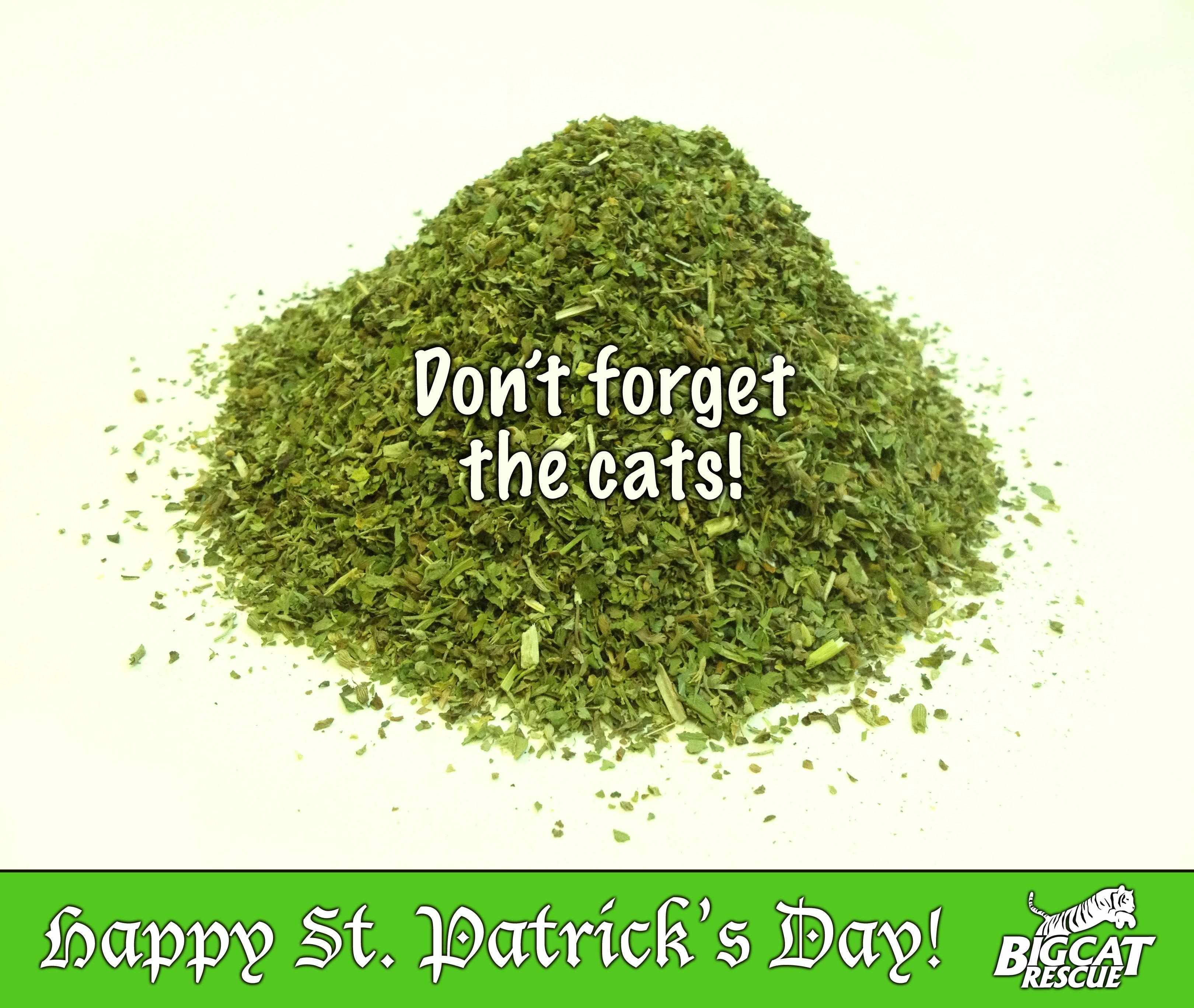 HAPPY ST. PATRICK'S DAY! *Do your cats like catnip