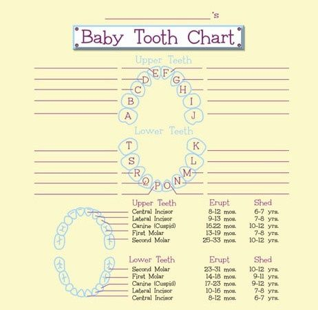 17 Best images about Baby Tooth Chart on Pinterest | Diy scrapbook ...