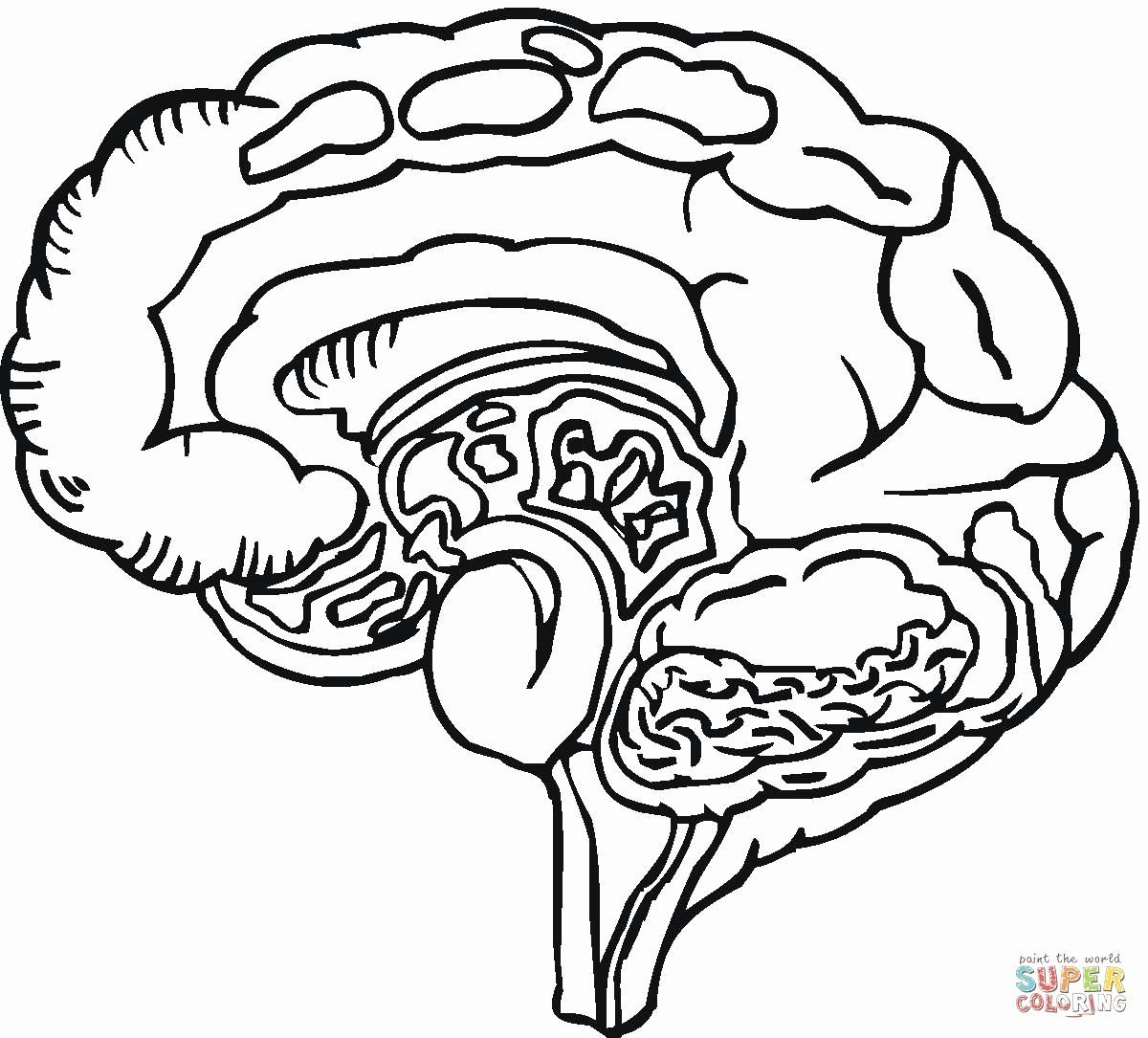 Human Brain Coloring Book Beautiful Human Brain Coloring Page Supercoloring Pasaulio Pazinimas Super Coloring Pages Animal Coloring Books Coloring Books