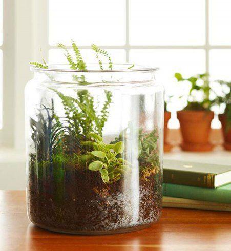 16 fa ons de d tourner des bocaux meilleures id es terrarium bocal et le bocal. Black Bedroom Furniture Sets. Home Design Ideas