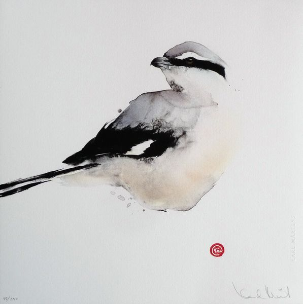 I have this one in my bedroom, watching over me- such a beautiful shrike!