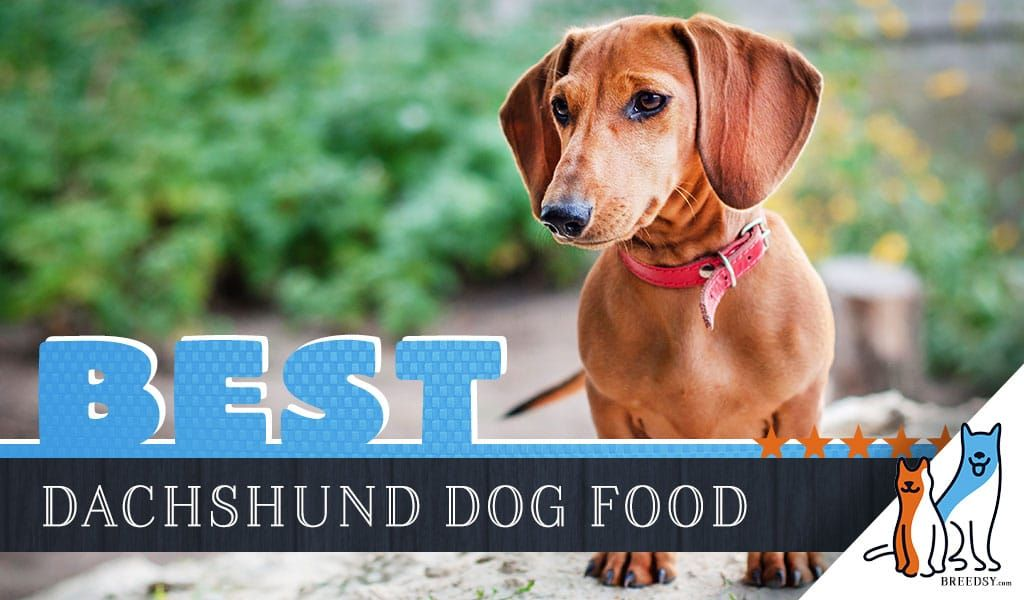 15 Best Dog Foods For Dachshunds Our 2020 In Depth Feeding Guide Best Dog Food Dog Food Recipes Dachshund