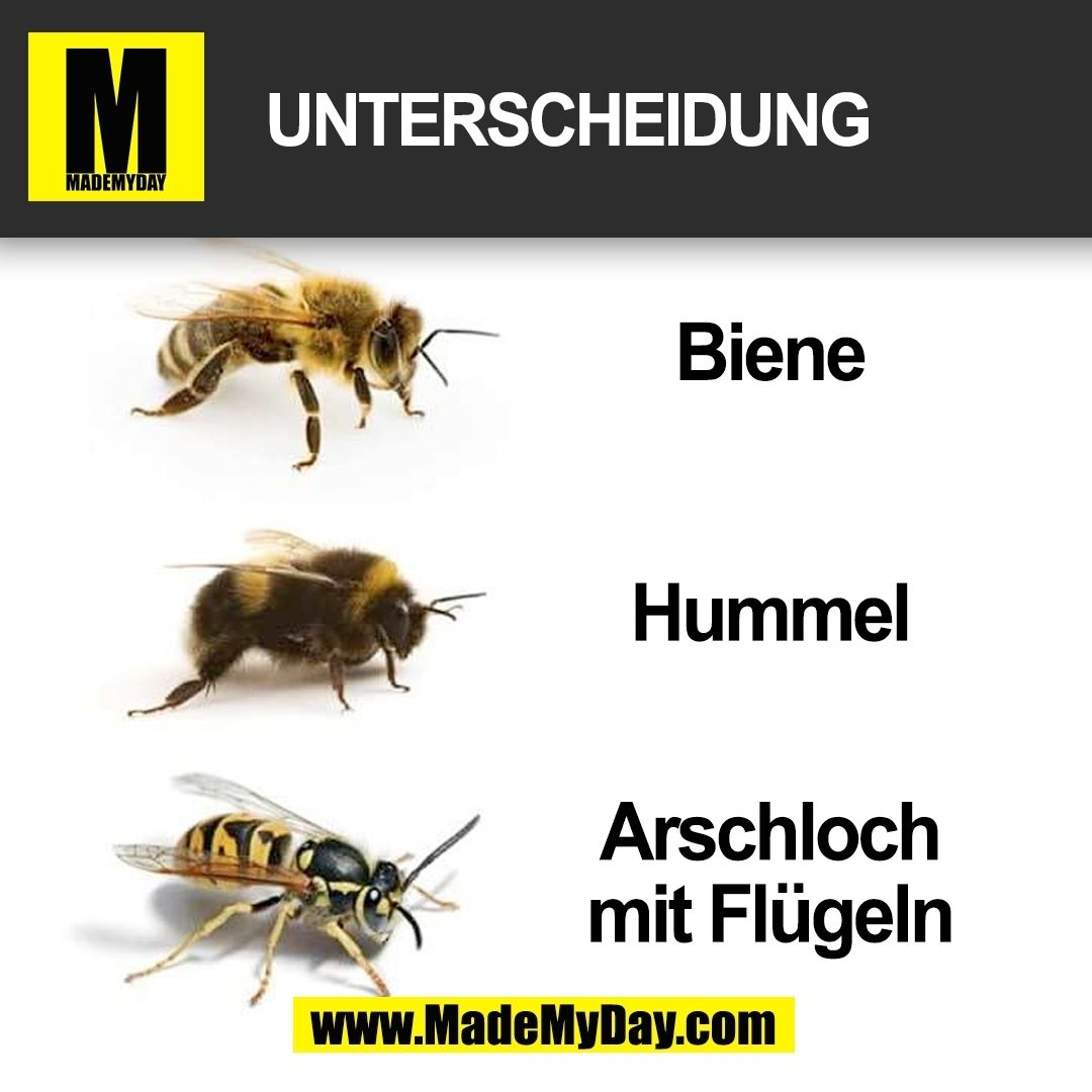 Biene, Hummel, Wespe bzw. Arschloch mit Flügeln | Lustig | Pinterest