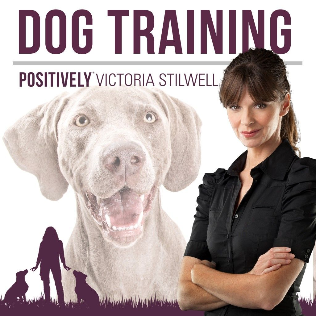 The New Victoria Stilwell Positively Podcast Is Online Now Dog