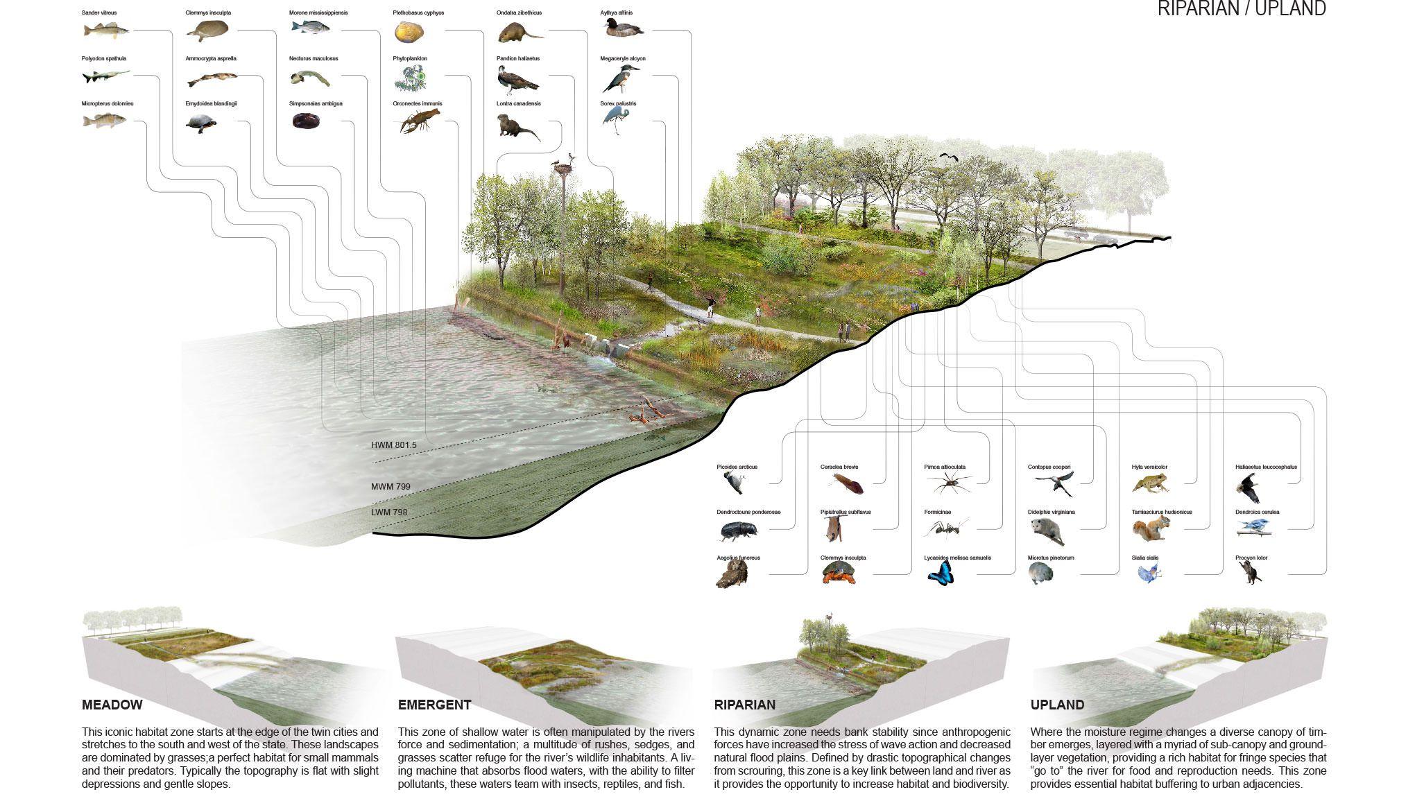 Riverfirst Tls Landscape Architecture Landscape Architecture