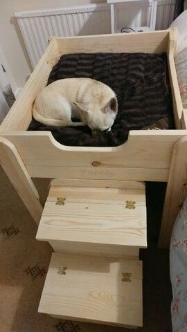 Chihuahua Bed Elevated Dog Bed Dog Rooms Cool Dog Houses
