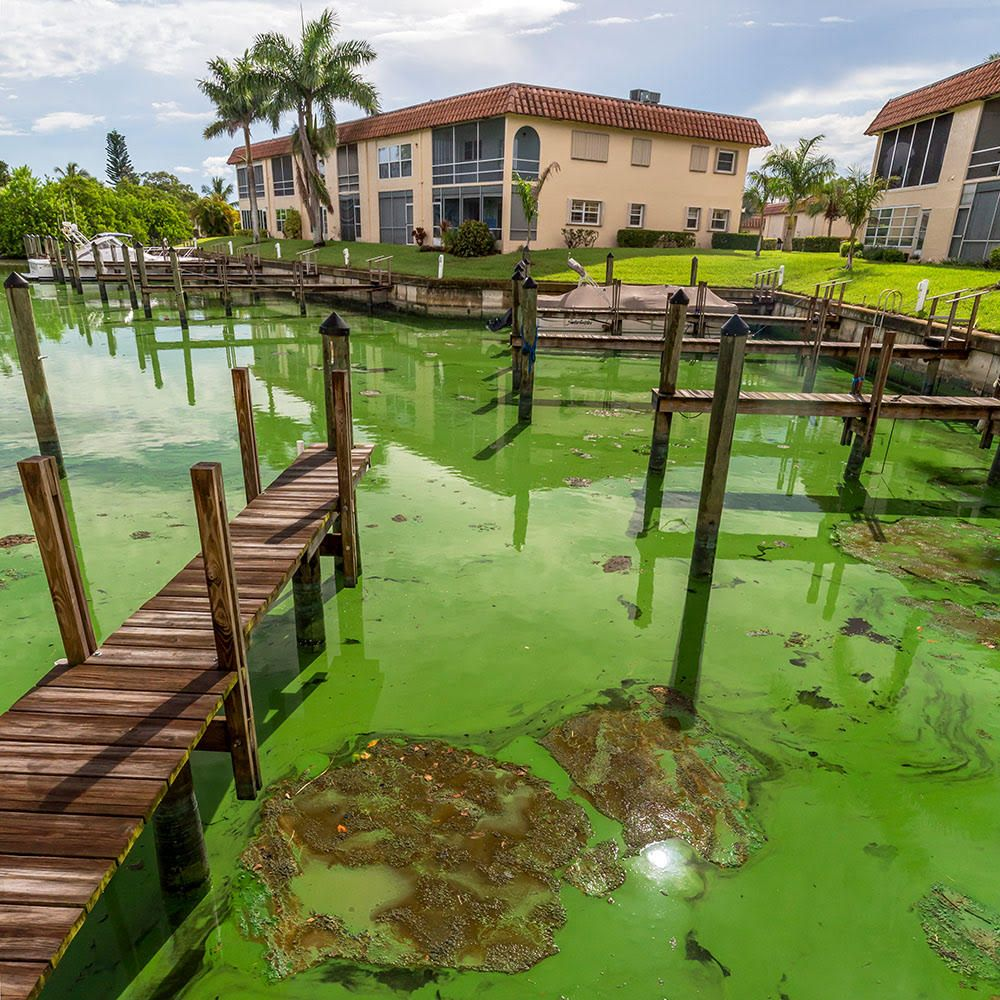 Stuart Fl Green Toxic Slime Everywhere