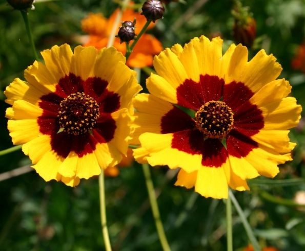 Daftar Nama Bunga Gambar Bunga Cantik Indah Unik Dan Langka Lengkap Dengan Penjelasannya Kumpulan Macam Macam Bun Bunga Bunga Bunga Indah Fotografi Bunga