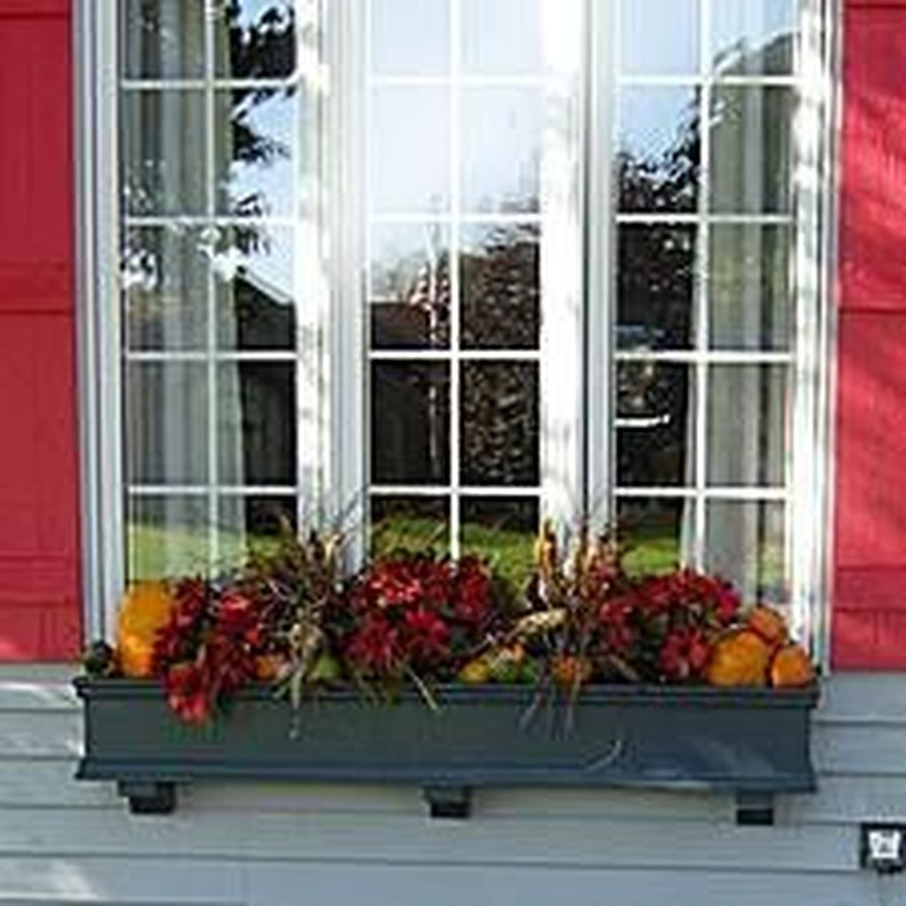 30 Gorgeous Colorful Winter Plants And Christmas For Frontyard