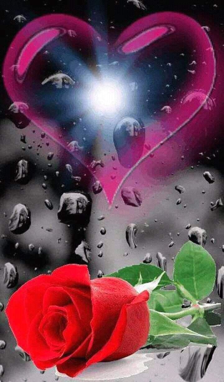 Pin On Roses Love romantic heart rose wallpaper hd