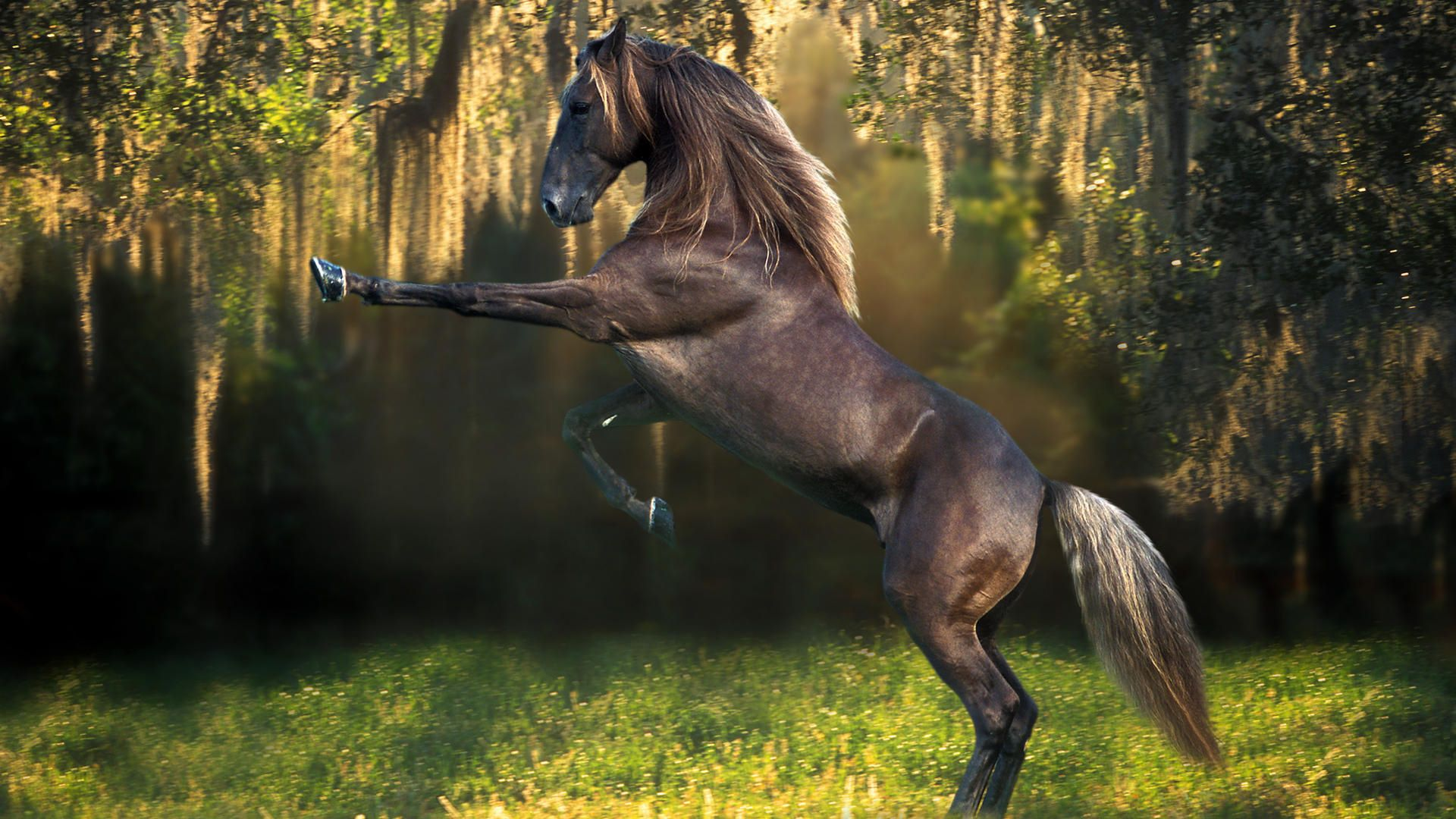 Horse wallpaper download free horse desktop wallpaper - Free horse backgrounds ...