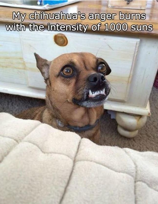 35 Funny Pictures Of The Day Dogsfunnyfaces Funny Animals Funny Dogs Funny Pictures