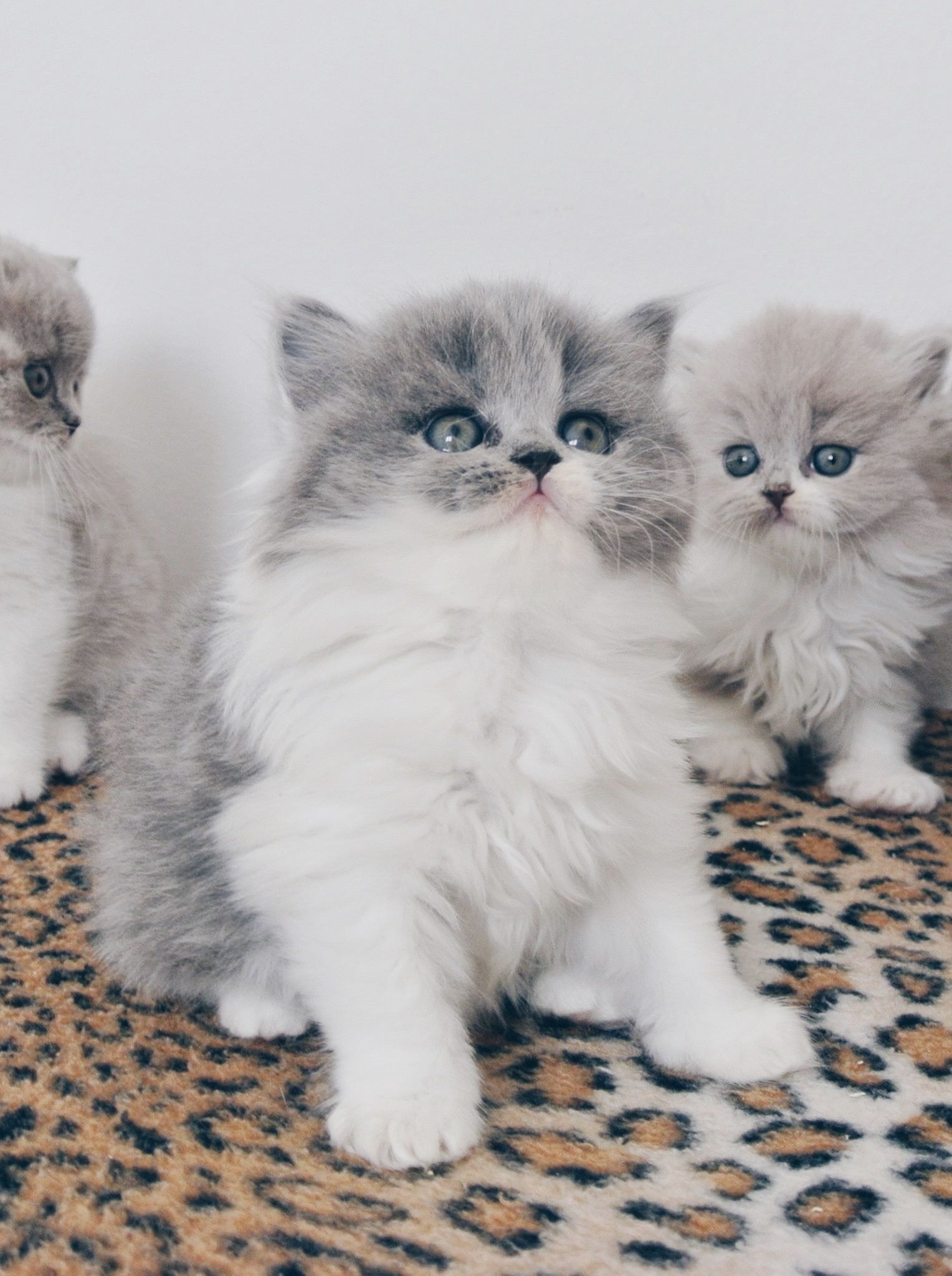 Actualites News Cute Cats Kittens Cutest Pretty Cats