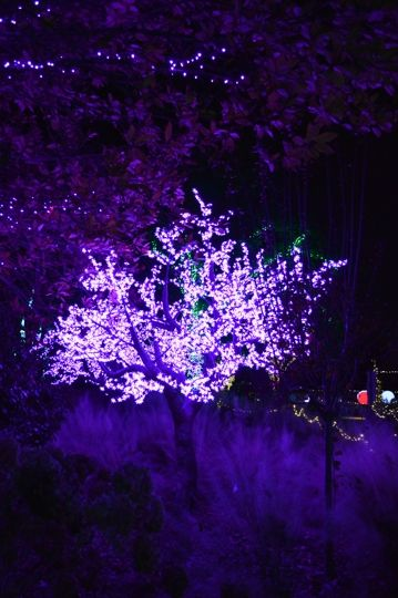 Garden Lights Holiday Nights At Atlanta Botanical