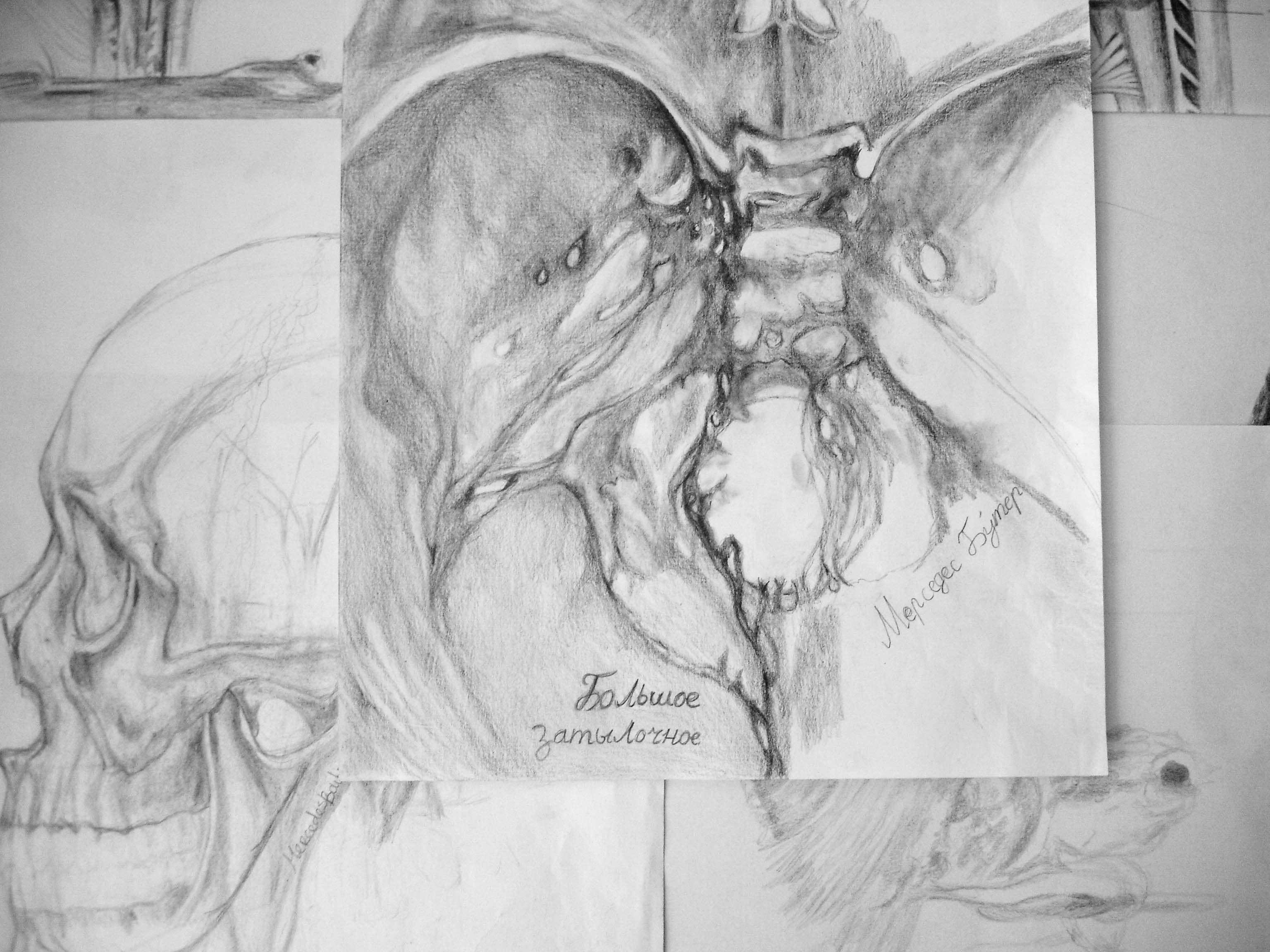 Tolle Foramen Magnum Anatomie Zeitgenössisch - Menschliche Anatomie ...