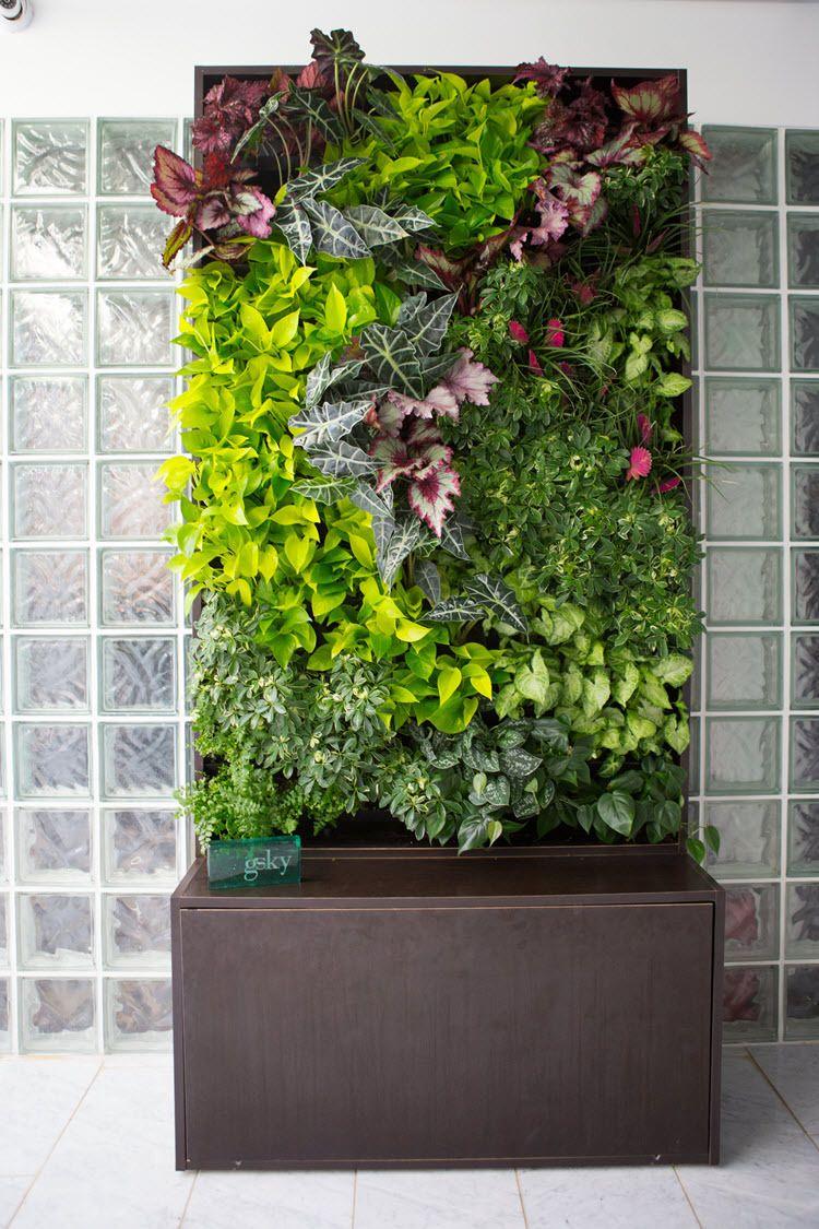 vertical wall garden plants