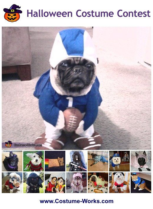 Homemade costumes for pets diy costumes costumes and dog football maniac diy costume ideas for dogs solutioingenieria Choice Image